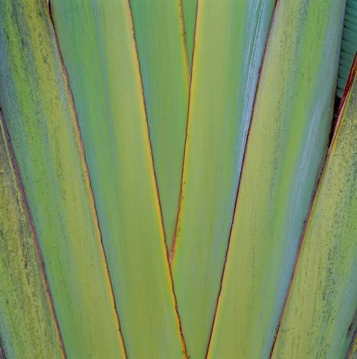 Stock Photo: 1597-121961  palm, details, cutting, part, structure, leaf,