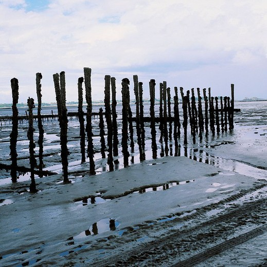 fishing, fishery, fisherman, oyster culture, mussel breeding, posts, coast, low, ebb, tide, France, Europe, Normandy, : Stock Photo