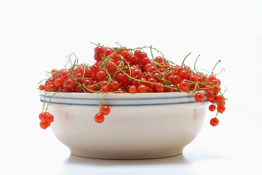red currants, berries, bowl, bowl, shell, white, studio, food, fruit, food, : Stock Photo
