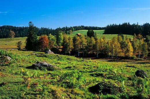 Zugerberg, Oberforen, Hochmoor, Bäume, Farn, Wandergebiet, Herbst : Stock Photo