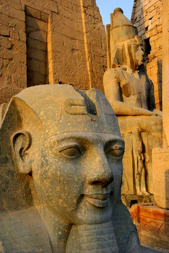 Stock Photo: 1597-126430 Egypt, North Africa, Luxor temple, cultural site, antiquity, antique