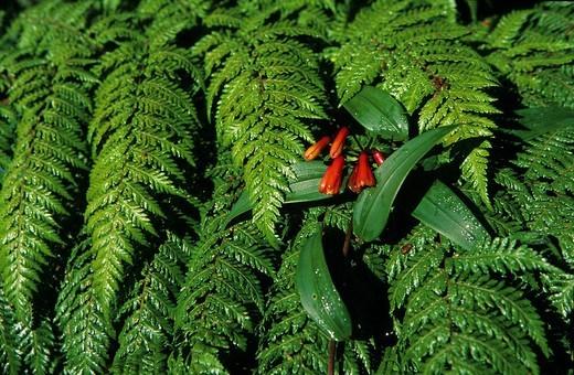 Costa Rica, botanical garden, tropical, tropics, v : Stock Photo