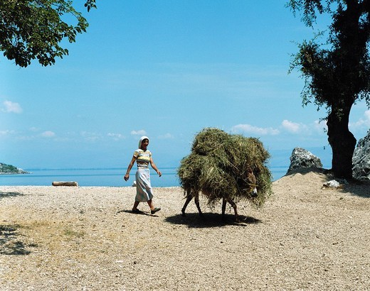 Stock Photo: 1597-127863  Montenegro, life, farmer, peasant, donkey, reed, dry, dehydrated, lake shore, Skutari, lake, sea, farmers, agriculture