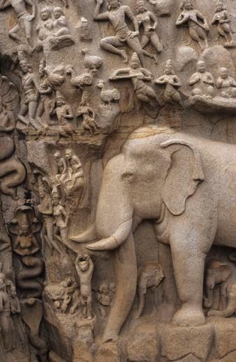 Arjunas penalty, Asian religions, Asia, cliff wall, river goddess, faith, Hinduism, India, Mahabalipuram, mythology, N : Stock Photo