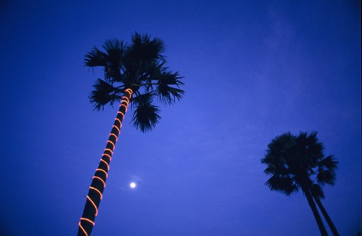 Africa, at night, Cape Point, Cape Point Hotel, full moon, Gambia, moon, night, palm trees, sky : Stock Photo