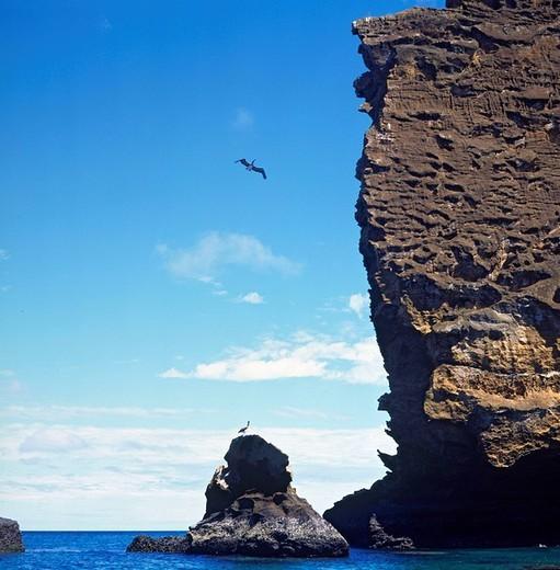 Pinnacle skirt, rock, Fregattvogel, birds, coast, sea, rock, Isla Bartolome, Galapagos Islands, Ecuador, South Amerika : Stock Photo