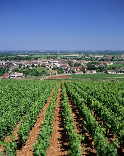Stock Photo: 1597-129673 Agriculture, Bourgogne, Burgundy, Countryside, France, Europe, Landscape, Mersault, Travel, Village, Vineyard, Vitic