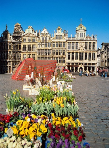 Belgium, Brussels, landmark, Grote market, flower market, market, flowers : Stock Photo