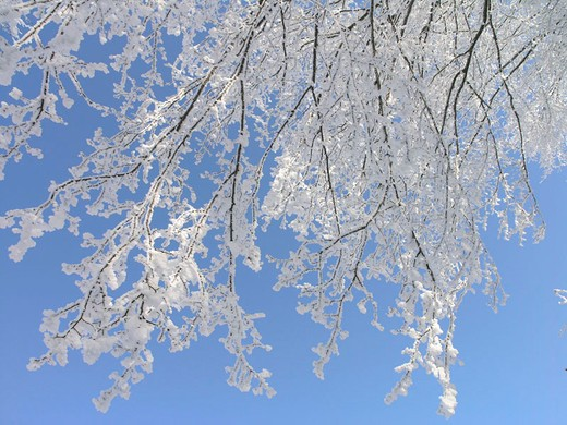 hoarfrost, cold, hoarfrost, cold, branches, knots, branches, sky, trees : Stock Photo