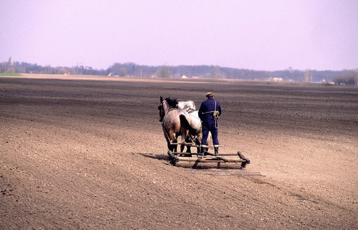 field, plowing, by hand, horse plow, cage, back view, scenery, Hungary, Europe, : Stock Photo