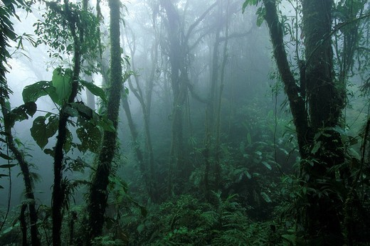 Costa Rica, Cloud forest, Wood, tropical, tropics, : Stock Photo