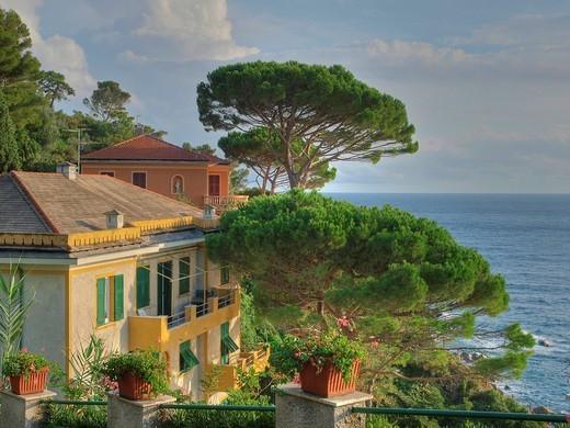 Sea, Mediterranean Sea, pines, Sestri Levante, villas, Sestri Levante, flowerpots, flowering plants, : Stock Photo