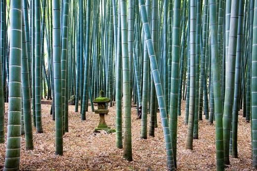 Stock Photo: 1597-137304 Kamakura, Japan, November, Asia, bamboo wood, bamboo, wood, forest, lantern, Toro lantern, autumn, nature