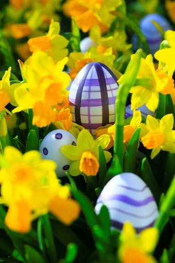 Stock Photo: 1597-140165 flower, flowers, splendour, blossom, flourish, detail, egg, eggs, holiday, holidays, spring, garden, garden flower, yellow narcissus, macro, pattern, sample, close_up, Narcissus pseudonarcissus, narcissus, Easter egg, Easter eggs, daffodil, Easter, point,. flower, flowers, splendour, blossom, flourish, detail, egg, eggs, holiday, holidays, spring, garden, garden flower, yellow narcissus, macro, pattern, sample, close_up, Narcissus pseudonarcissus, narcissus, Easter egg, Easter eggs, daffodil, Ea