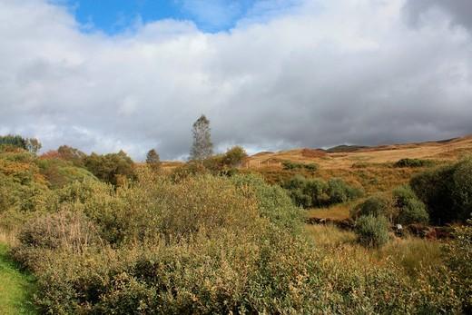Scotland, Europe, Great Britain, UK, autumn, nature, landscape, trees, wood, forest, plants, nature, colors : Stock Photo