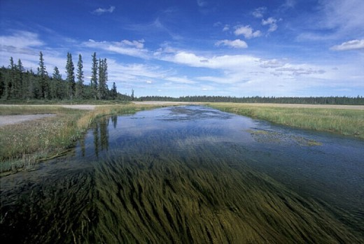 Alberta, Canada, North America, America, marsh, moor, national park, nature, Salt Pans, scenery, landscape, water, W : Stock Photo