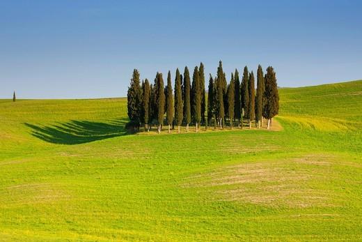 Stock Photo: 1597-142989 Torrenieri, Italy, Europe, Tuscany, crest, ridge, horizon, skyline, hill scenery, fields, trees, cypresses