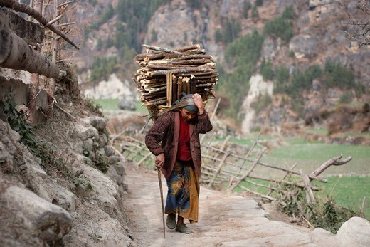 wood_collector, Himalaya, Nepal, Asia, Sherpa, porter, merchandise, basket, transport, goods, wood, hard work, daly life, hard : Stock Photo