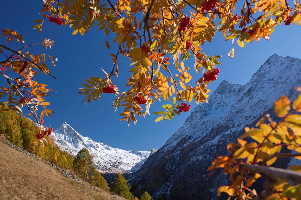 Stock Photo: 1597-145293 Mountain, mountains, autumn, Valais, Wallis, Switzerland, Europe, La Forclaz, Dent Blanche, Val d´Herence, Dent de Veisiv