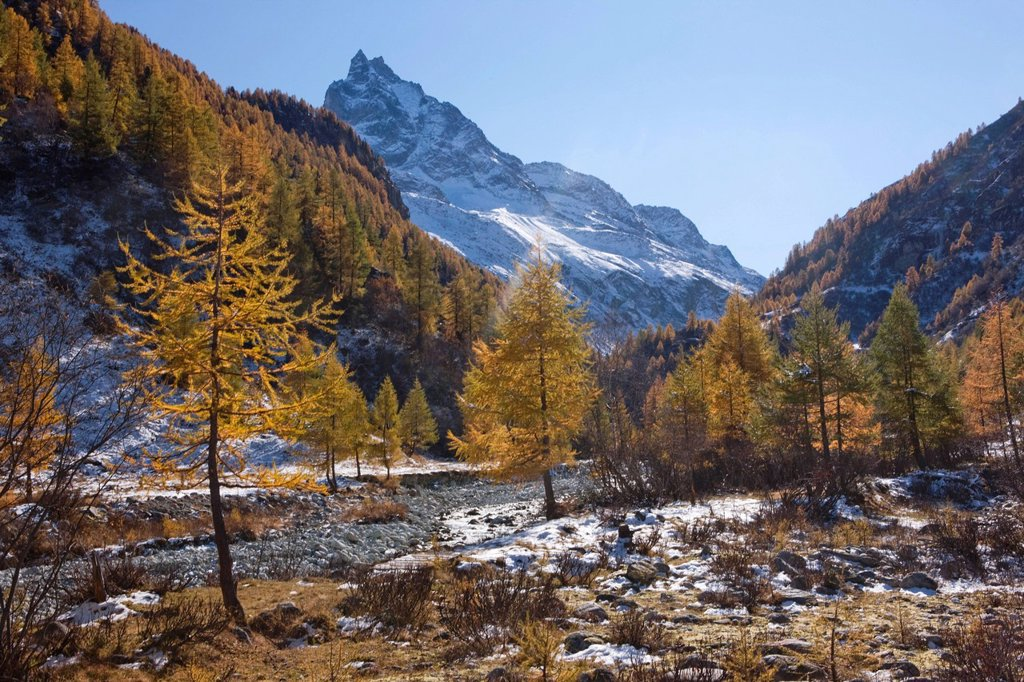 Stock Photo: 1597-145308 Mountain, mountains, autumn, Valais, Wallis, Besso, Val d´Anniviers, creek, brook, larches, Zinal