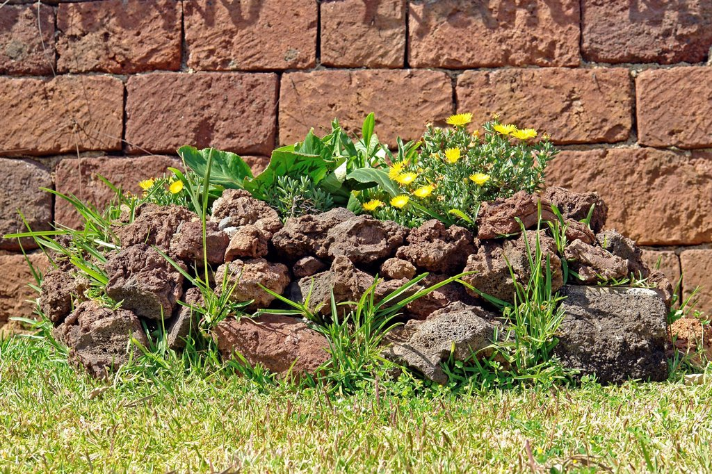Stock Photo: 1597-145831 Europe, Portugal, Madeira, Funchal, lava rock, yellow flowers, grass, flowers, detail, decorations, plants, wall, stone, still life