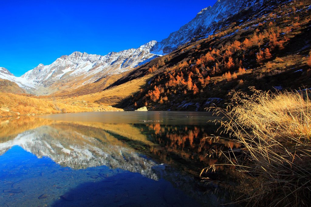 Stock Photo: 1597-145875 View, Lötschenlücke, Fafleralp, basic lake, autumn, colors, larch, larches, larch wood, Lötschenlücke, Lötschental, valley, Unesco, world heritage, Valais, Switzerland, Europe, world heritage, glassy,