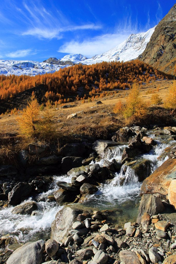 Alphubel, riverbed, autumn, colors, larch, larches, larch wood, Saas Fee, valley of Saas, sunshine, valley, Valais, Switzerland, Europe, sunny : Stock Photo