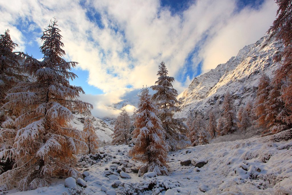 Stock Photo: 1597-146211 Arolla, Arolla valley, Arollatal, mountains, view, Eringer valley, larch, larches, fresh, snowfall, snow, blizzard, valley, Valais, Switzerland, Europe, winter, panorama