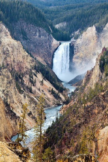 Stock Photo: 1597-146375 USA, United States, America, Wyoming, Yellowstone, National Park, Lower Yellowstone Waterfalls, Artis Point, Water, deep, famous, park, river, springs, steep, stream, water fall, yellow