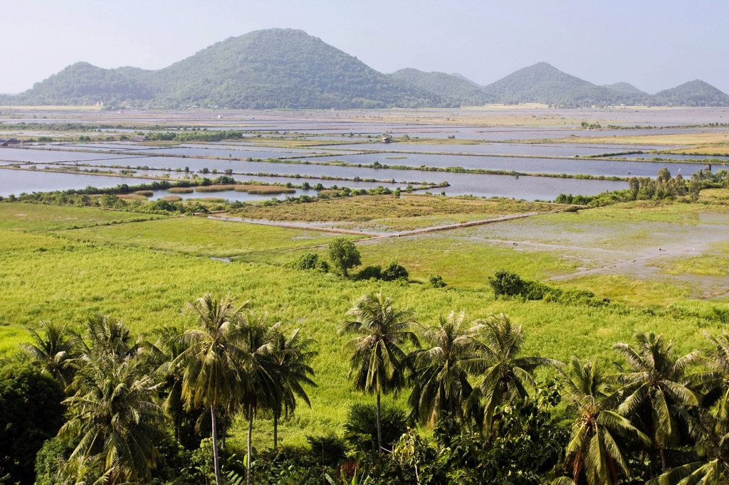 Stock Photo: 1597-147417 Asia, outside Can villages, delta, river delta, river deltas, river, flow, river delta, scenery, Mekong, South_East Asia, Südvietnam, Tho, shore, Vietnam, Vietnamese, water