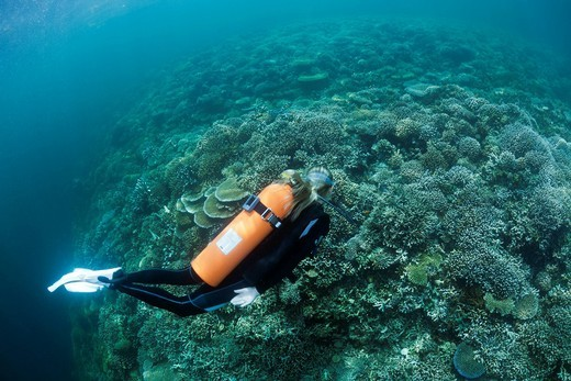 Scuba diver, scuba, diver, diving, dive, sportdiver, sportdiving, sport, watersport, Activity, Branching corals, Branching Coral, Scleractinia, Acropora, Acroporiddae, Stoney corals, Stone Corals, Staghorn Coral, corals, Reef, Reefs, Coralreef, Coralreefs. Scuba diver, scuba, diver, diving, dive, sportdiver, sportdiving, sport, watersport, Activity, Branching corals, Branching Coral, Scleractinia, Acropora, Acroporiddae, Stoney corals, Stone Corals, Staghorn Coral, corals, Reef, Reefs, Coralreef : Stock Photo