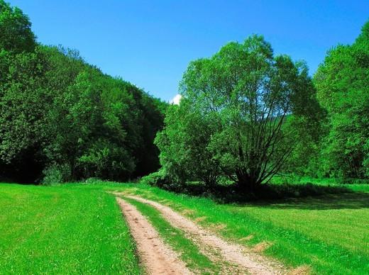 Away, wood, forest, edge of, forest, meadow, sky, heaven, Frankish, Franconian Switzerland, Germany : Stock Photo