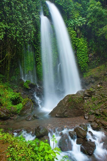 Jumog, Indonesia, Asia, Java, primeval forest, jungle, rain forest, nature, waterfall, nature, water, brook : Stock Photo