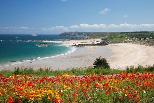 Europe, France, Brittany, Cotes_D´Armor, Cap Frehel, Emerald Coast, Pleherel Beach, Beach, Beaches, Flowers, Coast, Coastal View, Tourism, Travel, Holiday, Vacation : Stock Photo