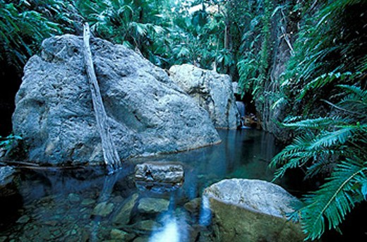 Stock Photo: 1597-15668 Australia, El Questro Gorge, El Questro station, primeval forest, rain forest, rock, scenery, landscape, Kimberley´s