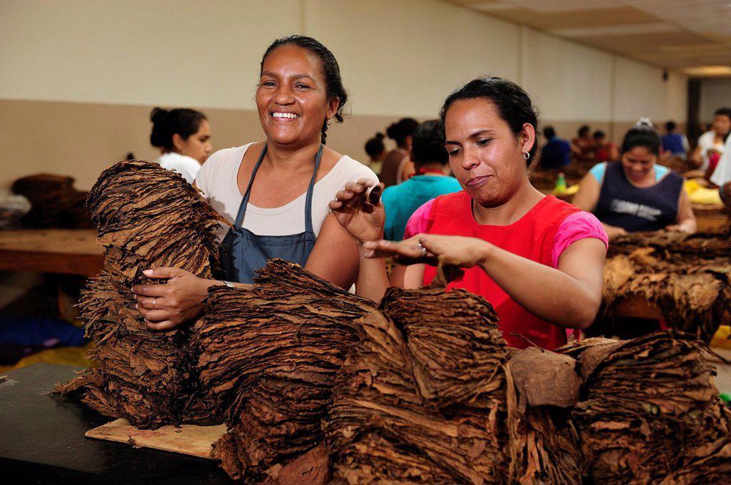 Stock Photo: 1597-158730 Latina, sorting, women, Cigar, factory, tobacco, Perdomo Cigars, Nicaragua, Central America, horizontal