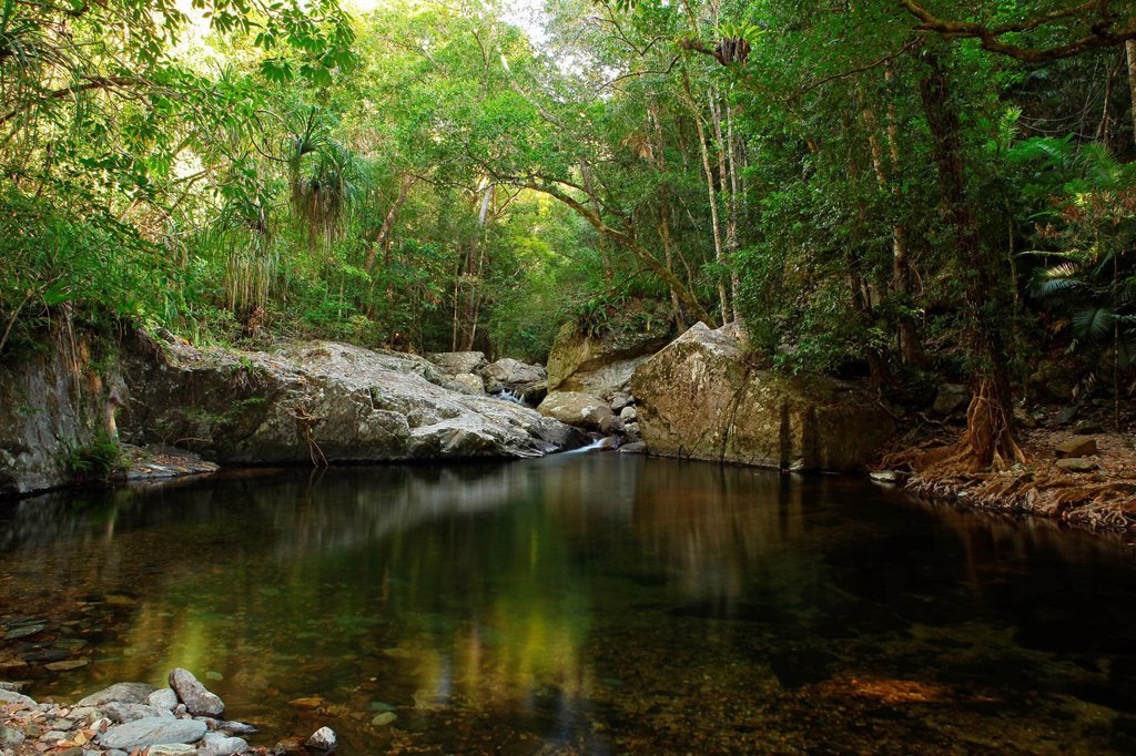 Stock Photo: 1597-160418 Stoney Creek, river, brook, water, waterfall, stones, primeval forest, rain forest, jungle, hiking, lonely, idyllic, Cairns, Queensland, Australia, east coast, wood, forest, palms, fern, chilly, freshly, clear, rest, spare time, vacation, holidays, nature
