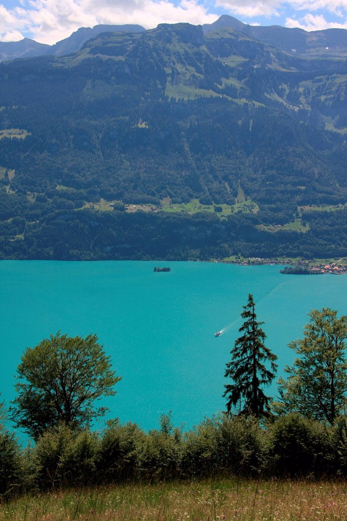 Stock Photo: 1597-162414 Switzerland, Europe, canton, Bern, Bernese Oberland, Brienzersee, Iseltwald, lake, firs, mountains, wood, forest,