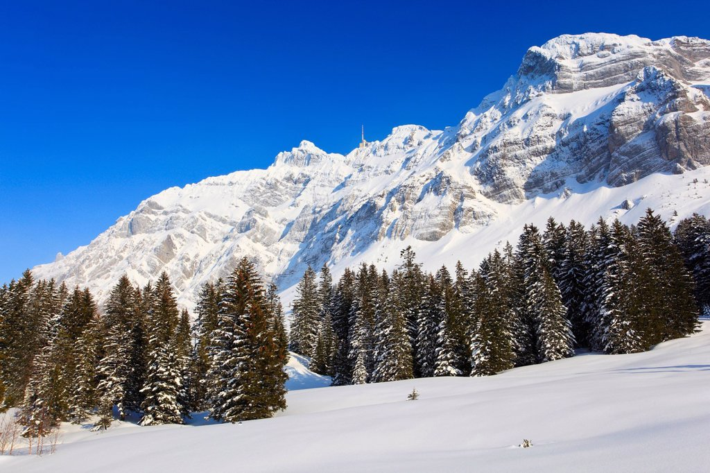 Stock Photo: 1597-162453 In 2502 m, Alp, Alps, Alpstein, Alpstein area, Appenzell, view, mountain, mountain panorama, mountains, mountain panorama, trees, mountains, sky, massif, panorama, snow, Switzerland, Europe, sun, sunshine, Säntis, fir, firs, fir wood, wood, forest, winter. In 2502 m, Alp, Alps, Alpstein, Alpstein area, Appenzell, view, mountain, mountain panorama, mountains, mountain panorama, trees, mountains, sky, massif, panorama, snow, Switzerland, Europe, sun, sunshine, Säntis, fir, firs, fir wood, wood, fo