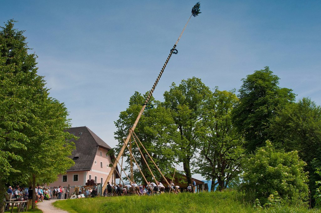 Stock Photo: 1597-162942 Bavaria, Europe, Upper Bavaria, custom, tradition, meadow, Höglwörth, Berchtesgaden area, customs, maypole, tree, put up, tradition, village, village square, national costume, Trachtler,