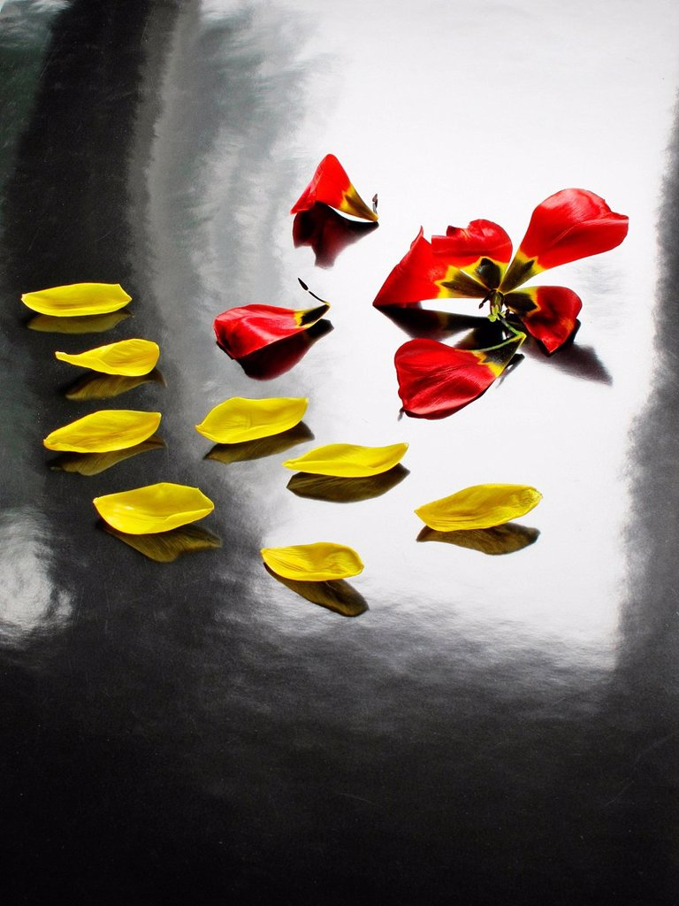 Flowers, plants, cut flowers, tulips, petals, leaves, red, yellow, alienated : Stock Photo