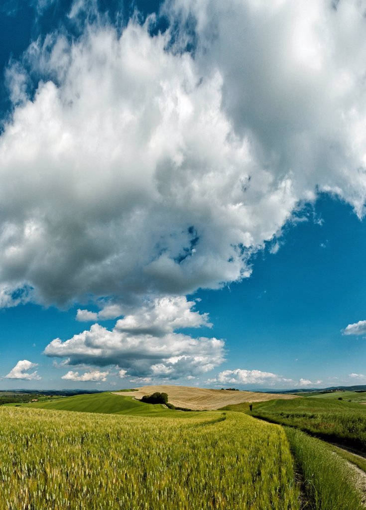 Isola d´Arbia, Italy, Europe, Tuscany, Toscana, scenery, agriculture, green hill, fields, clouds : Stock Photo