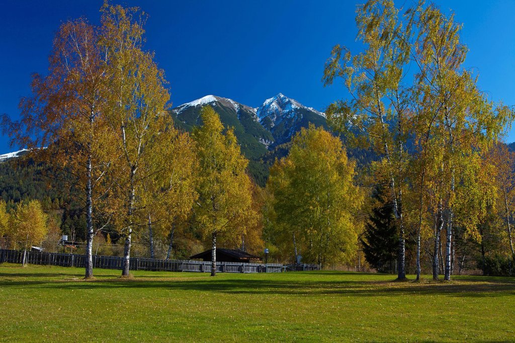 Stock Photo: 1597-169132 Austria, Europe, Tyrol, Tirol, Seefeld, meadow, birches, trees, Yellow, autumn, blue, green, snow, mountain, Reither Spitzer, Reither, point, peak, Karwendel, Karwendelgebirge, vacation, rest, silence, calmness, loneliness, nobody, tourism, traveling, off. Austria, Europe, Tyrol, Tirol, Seefeld, meadow, birches, trees, Yellow, autumn, blue, green, snow, mountain, Reither Spitzer, Reither, point, peak, Karwendel, Karwendelgebirge, vacation, rest, silence, calmness, loneliness, nobody, tourism, tr