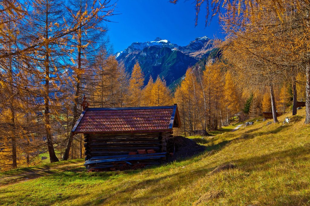 Austria, Europe, Tyrol, Tirol, Gschnitztal, Trins. Mountain pastures, meadows, Stadel, hay barn, larches, mountains, Tribulaun, Stubai Alps, snow, blue, orange, Red, green, vacation, rest, silence, calmness, rest, traveling, holiday purpose, agriculture, : Stock Photo