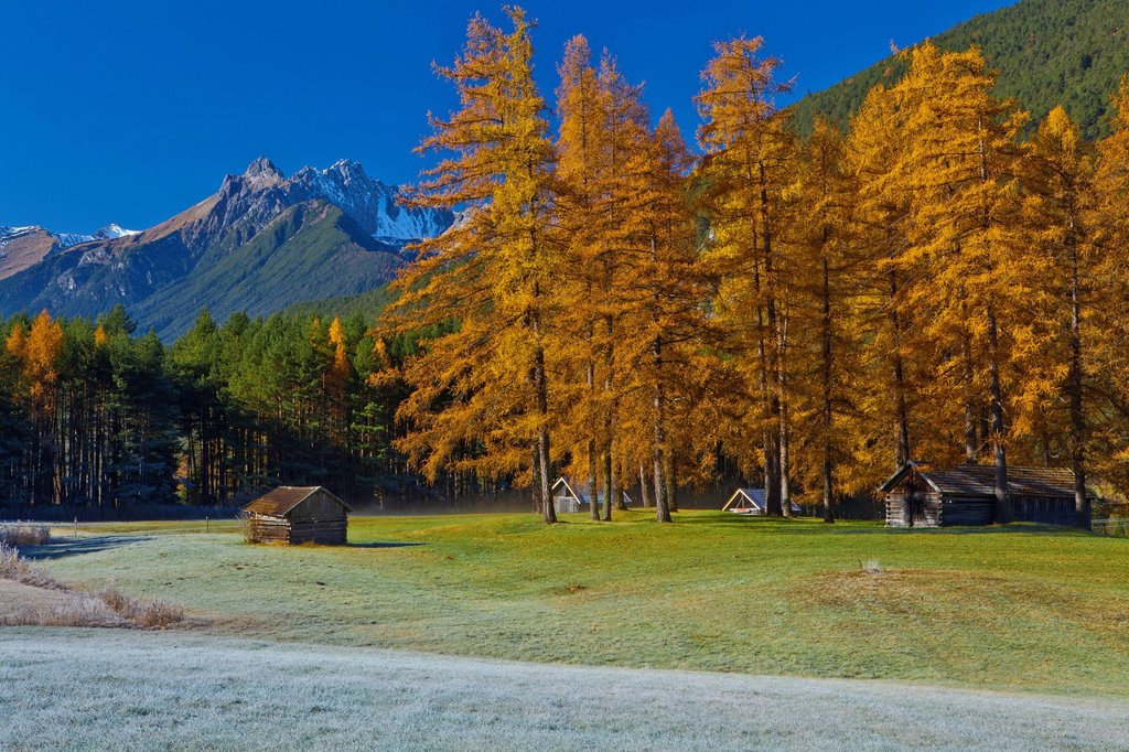 Austria, Europe, Tyrol, Tirol, Gurgltal, Nassereith, fields, meadows, white frost, late autumn, trees, larches, Yellow, blue, Stadel, hay huts, mountains, Platteinspitze, Lechtal Alps, rest, silence, calmness, rest, vacation, travel, traveling, destinatio. Austria, Europe, Tyrol, Tirol, Gurgltal, Nassereith, fields, meadows, white frost, late autumn, trees, larches, Yellow, blue, Stadel, hay huts, mountains, Platteinspitze, Lechtal Alps, rest, silence, calmness, rest, vacation, travel, traveling : Stock Photo