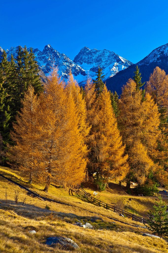 Stock Photo: 1597-169660 Austria, Europe, Tyrol, Tirol, Kaunertal, mountain Kauner, Schnadigen, alp, larches, autumn, late autumn, mountains, Kaunergrat, Ötztal, Alps, high, alpine, rest, silence, calmness, rest, travel, traveling, tourism, nature, view, panorama