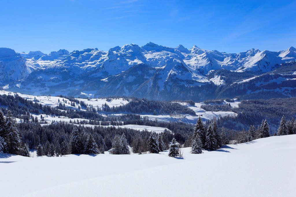 Stock Photo: 1597-181855 Alps, Alpine wreath, Alpine, panorama, view, mountain, mountains, trees, spruce, spruces, mountains, summits, peaks, Central Switzerland, Internal Swiss Alps, ridge, cold, Mythen region, area, myth region, panorama, snow, Switzerland, Europe, Swiss Alps, Schwyz, Schwyzer Alps, fir, firs, wood, forest, winter, central Switzerland, blue sky, cold, Swiss