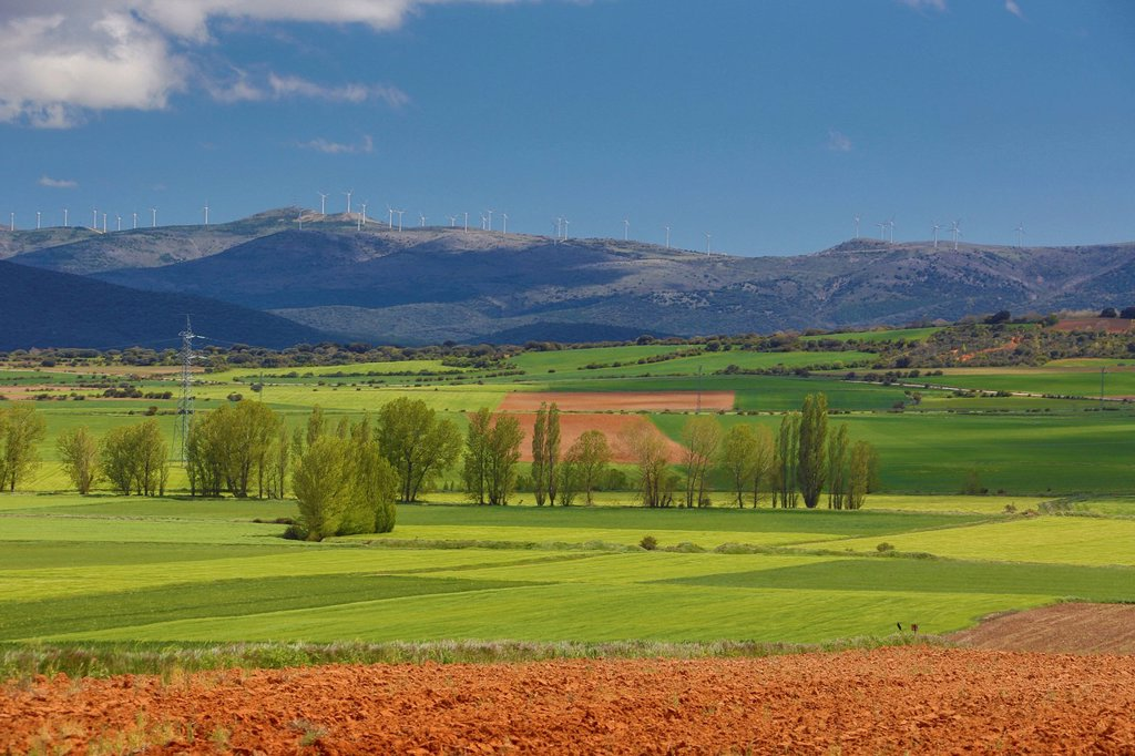 Stock Photo: 1597-186192 Aragon, colourful, countryside, earth, landscape, nature, purple, red, soria, Spain, Europe, spring, agriculture, field,