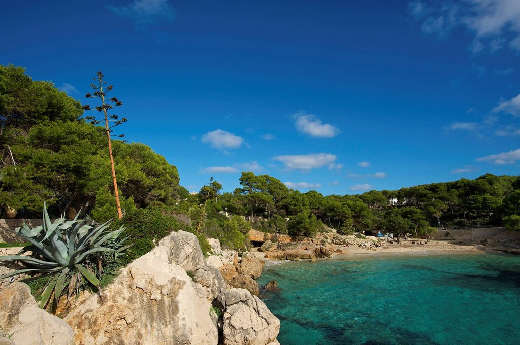 Balearic Islands, Majorca, Spain, Europe, Cala Gat, Cala Ratjada, bay, coast, coastal scenery, landscape, scenery, Mediterranean Sea, sea, beach, seashore, outside, nobody, : Stock Photo