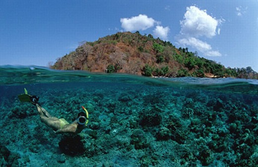 Stock Photo: 1597-20322 action, blue, coral, coral reef, diving, holiday, holidays, Indian Ocean, Indonesia, Komodo, national park, live, ma